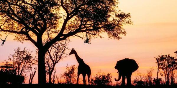 met-kinderen-naar-zuid-afrika