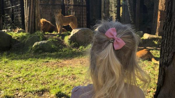Dierenpark Amersfoort, het leukste uitje met kinderen: Nicolet deelt haar ervaringen!