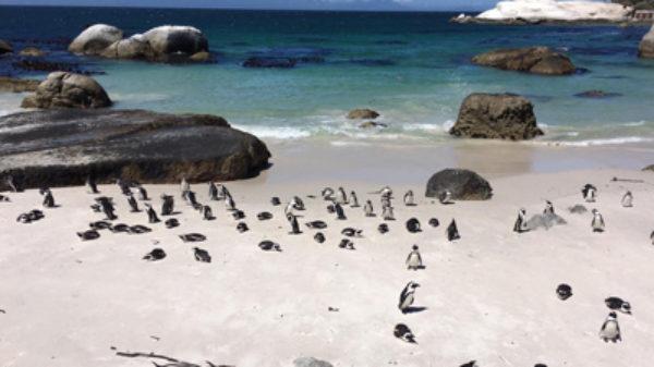 5 bekende en minder bekende kindvriendelijke activiteiten in de Kaap, Zuid-Afrika