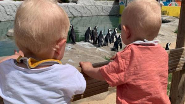 De Portugese Algarve met kinderen: 4 x leuke to do's voor op een bewolkte dag